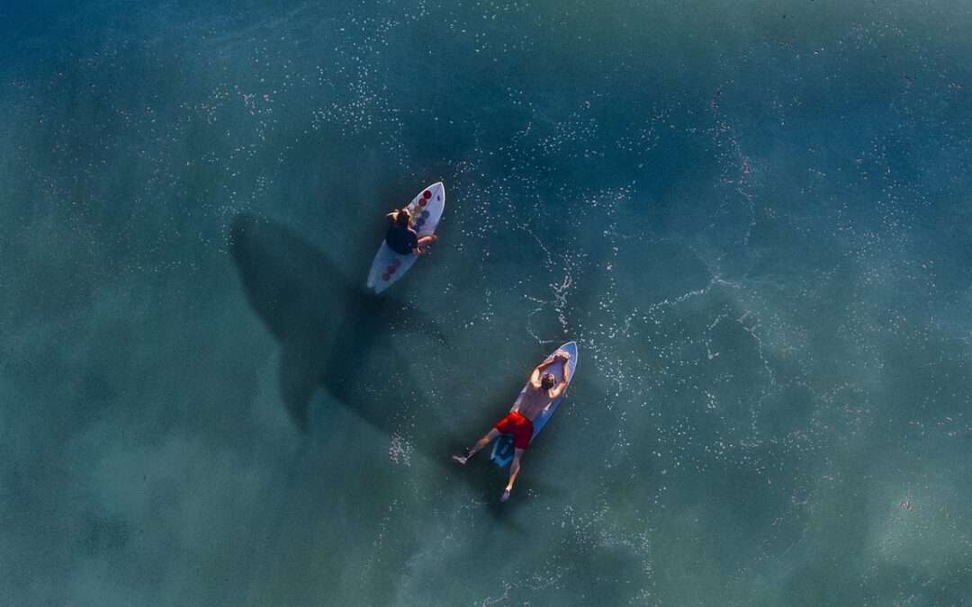 I droni Einstein: le nuove sentinelle californiane contro gli squali (ma anche gli umani)